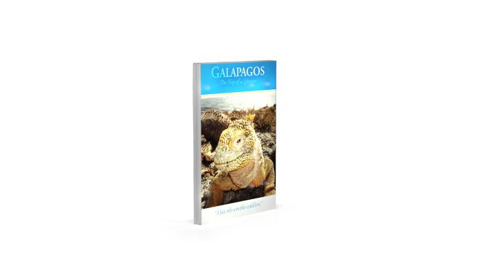 Iguana Lightbox alone